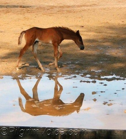 imgs-reflections-foal1703
